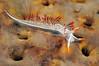 Flabellina trilineata, Three-lined Aeolid, on sponge<br /> Hyperion Pipe, El Segundo, California