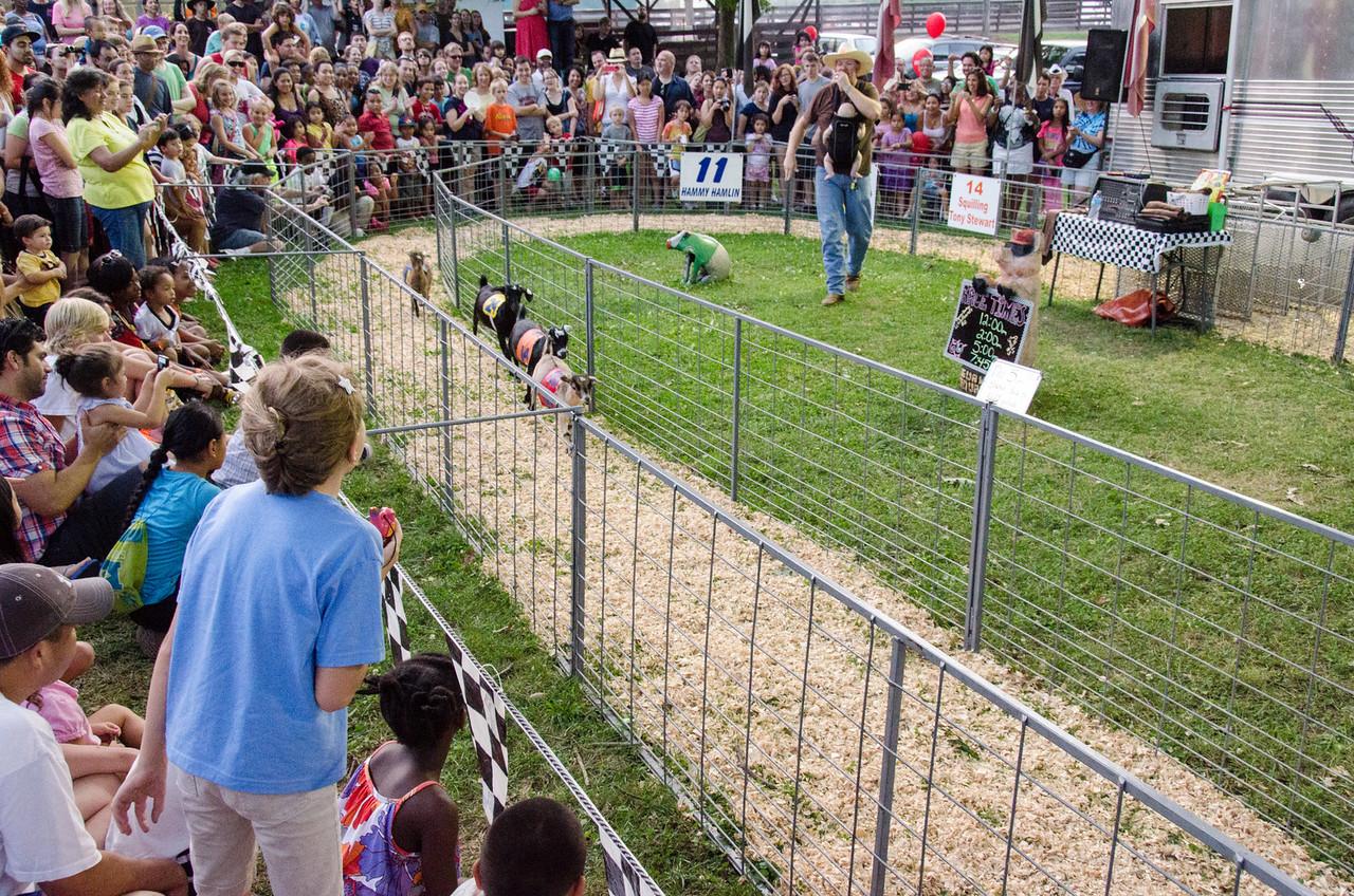 Racing baby goats.