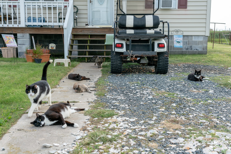 This island has a lot of cats! Apparently there used to be many more. They had a project to spay and neuter them all.