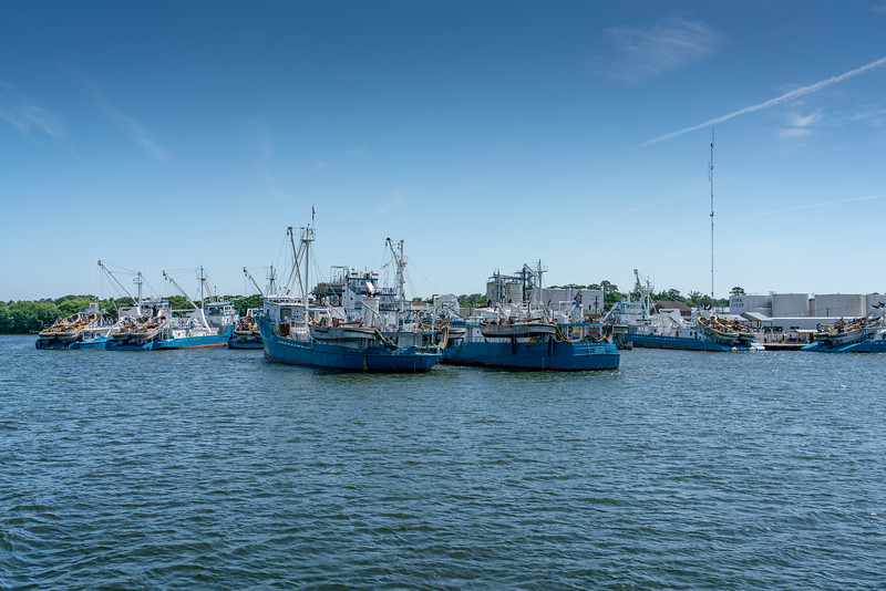 Omega Protein's fleet takes a huge proportion of a fish called menhaden from the Chesapeake Bay. It is used in cosmetics and omega 3 supplements.