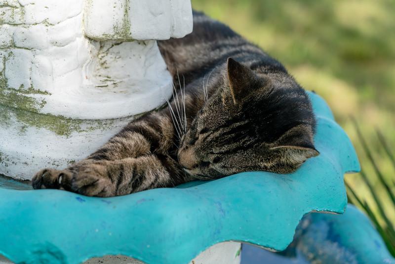Island cat sleeping in a defunct fountain.