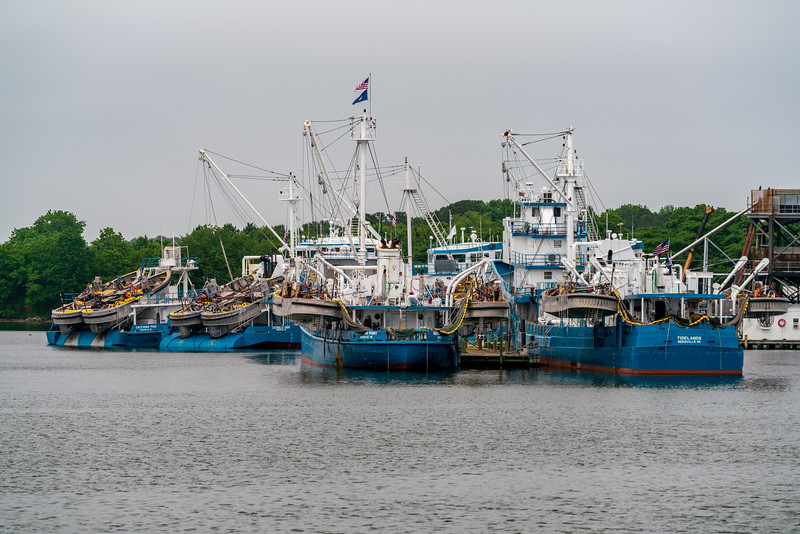 Back in Reedville, another look at the Omega Protein fleet that is raping the bay.