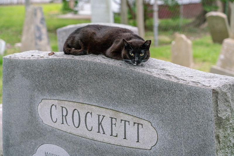 This cat looked like he was guarding the Crockett grave.