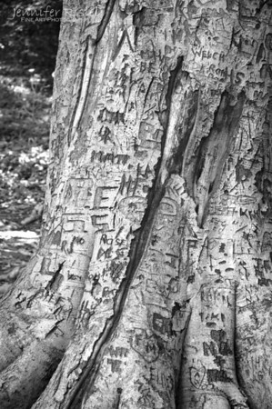 Tree Carvings at Maymont Park