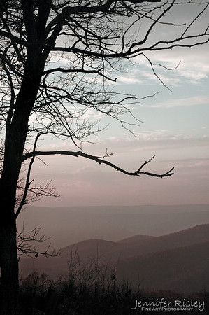 Tree Silhouette over the Mountains