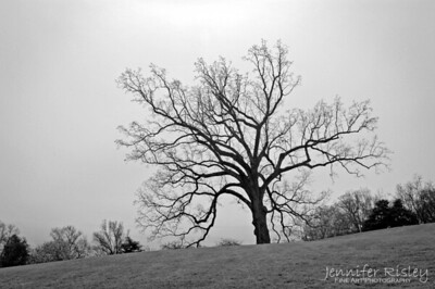 Tree at Arlington National Cemetery