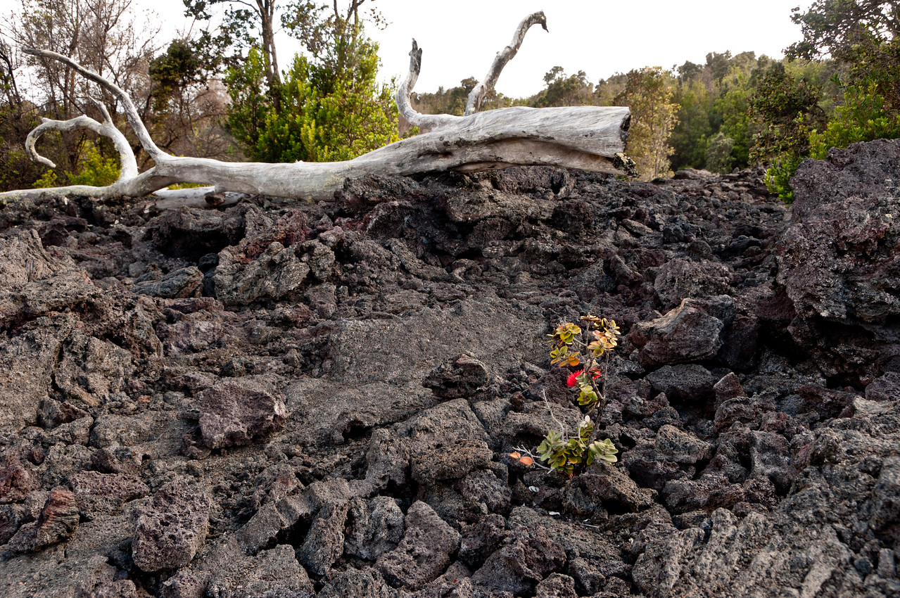 Another lava flow on the Volcano tour, Hawaii.