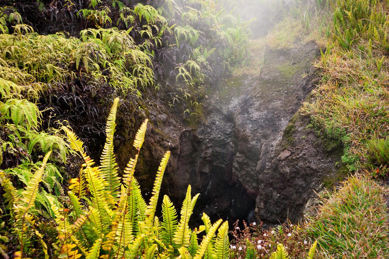 Outside the Thurston Lava Tube, volcano tour, Hawaii