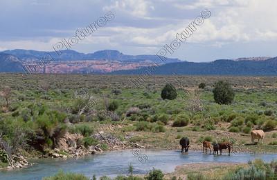 landscape,landschap,paysageCarmel Junction,USA