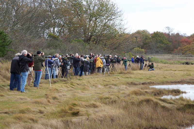 Crowd gathered at Marsh Meadows Preserve to see wood sandpiper 10/14/12