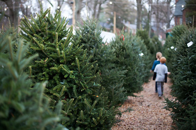 It's that fun and exciting time again - looking for the perfect Christmas tree at one of the local tree farms.