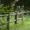 9/12/2011 - Fence, Dupont State Forest, NC