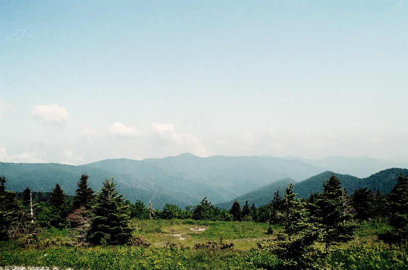 Mt. Mitchell, NC (Yancey County) June 2011