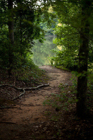 31/52 - A trail that leads to the water's edge at Reedy Creek Park here in Charlotte. I've spent many days and hours taking pictures in this park and most times I visit I see something new.
