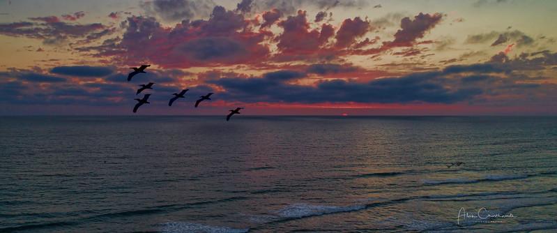 Pelicans Passing
