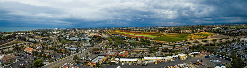 Carlsbad flower field panoramic