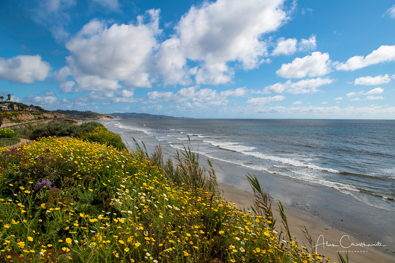 Wildflowers at Del Mar