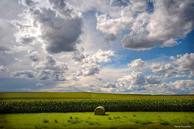 Western North Dakota corn field