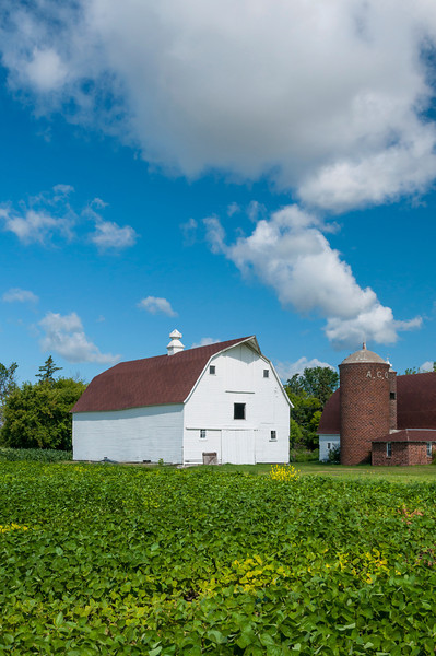Two white barns and a farm field near Grand Forks, North Dakota, USA, America.