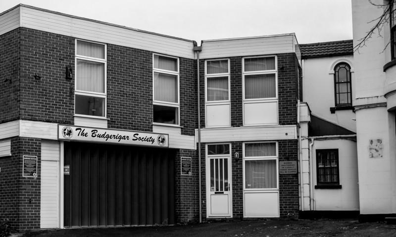 The Budgerigar Society, Derngate. Northampton
