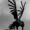 Bird, Grange Inn, Grange Park, Northampton