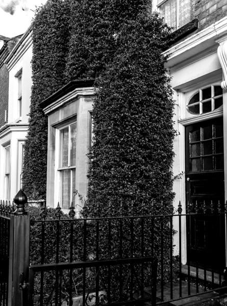 Foliage, York Road, Northampton