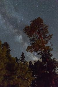 Star Pine Road