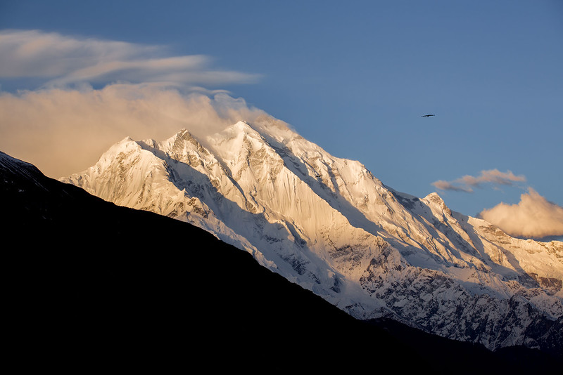 Rakaposhi. 7788m. Seen from Karimabad.