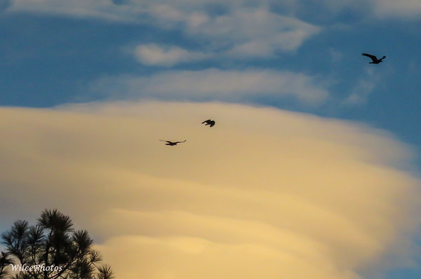 Corvids and Clouds