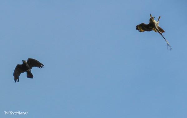 Osprey Acrobatics
