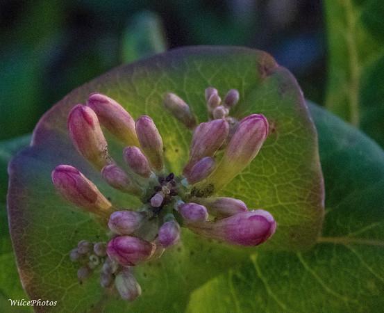 Flowering plant under trees