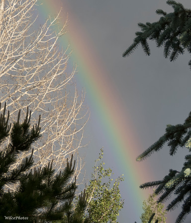 Phenomena; Rainbow; Flagstaff; IMG_5548