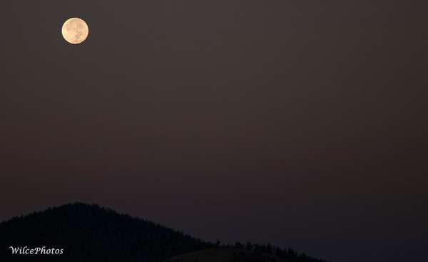 Moonset Over Flagstaff (Photo #5948)