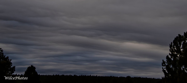 CloudsOverTrees; SchultzPassRoad; 14Dec2020; 9058