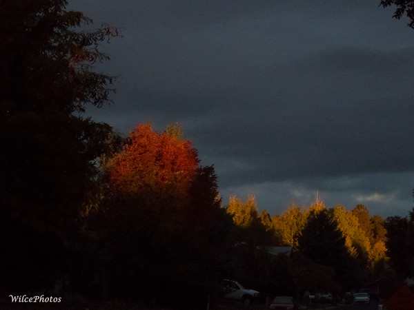 Dawn Lighting Up FallColors