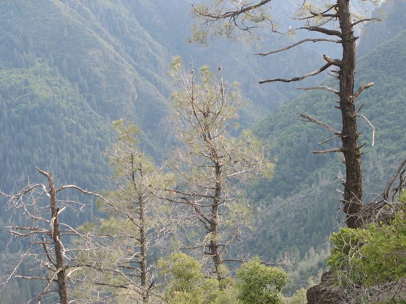 Rocky Point Trees