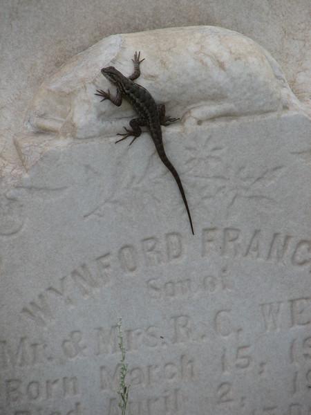 Lizard on Headstone, Boca