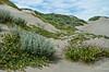 Peak of Spring - Manilla Dunes