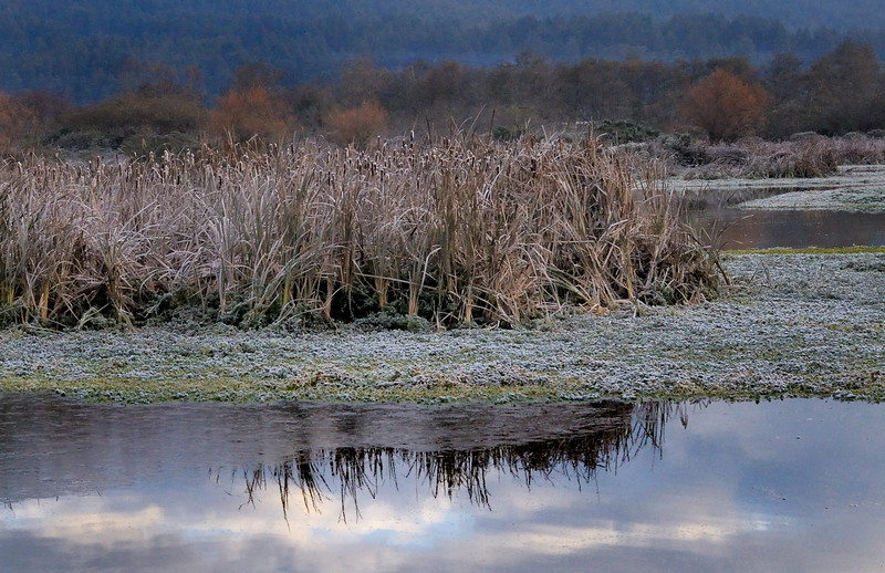 Icy Morning - Arcata Marsh