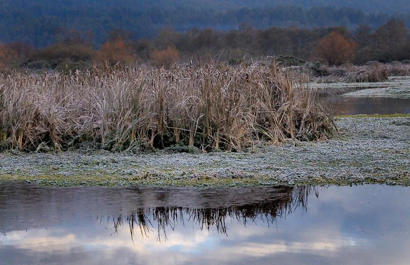 Icy Morning - Arcata Marsh