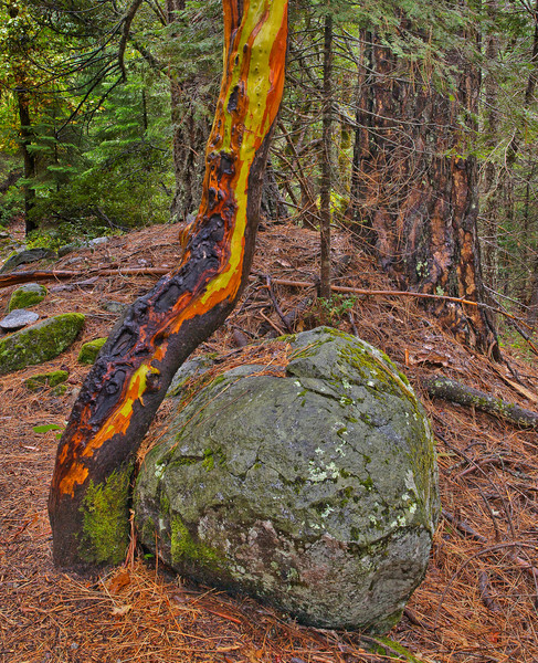 "A Rolling Stone Gathers a Madrone!  Canyon Creek - Trinity Alps Wilderness<br /> <br /> This works well in the size 24"" x 30"" - Mounted Print $ 245 - Print only $ 145<br /> <br /> I mount prints in my special way (mounted flush on 1/2"" thick rigid gator foam with no matte or glass) or you can have any quality art shop prepare the print to your preferred style. I can email you more info on my custom mounting."
