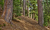 Trail To Rush Creek Lakes