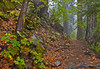 "Trail Along Canyon Creek on a moist Halloween day.<br /> <br /> This works well in two sizes:<br /> <br /> 20"" x 30"" - Mounted Print $ 195 - Print only $ 125<br /> 24"" x 36"" - Mounted Print $ 295 - Print only $ 175<br /> <br /> I mount prints in my special way (mounted flush on 1/2"" thick rigid gator foam with no matte or glass) or you can have any quality art shop prepare the print to your preferred style. I can email you more info on my custom mounting."