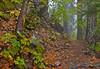 Trail Along Canyon Creek on a moist Halloween day.