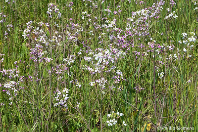 Flowers along the Coyote Creek Trail