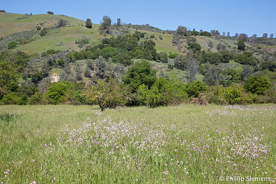 Southern end of Coyote Creek Trail
