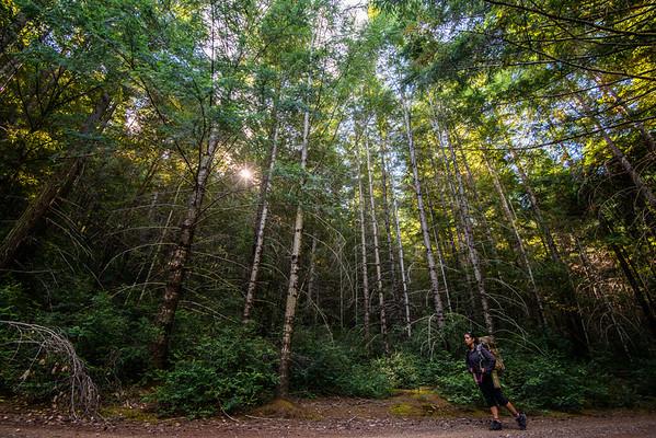 california; california coast ranges; california state parks; humbodt redwoods state park; Sharon; trees Sharon hiking along the Grashopper Trail.