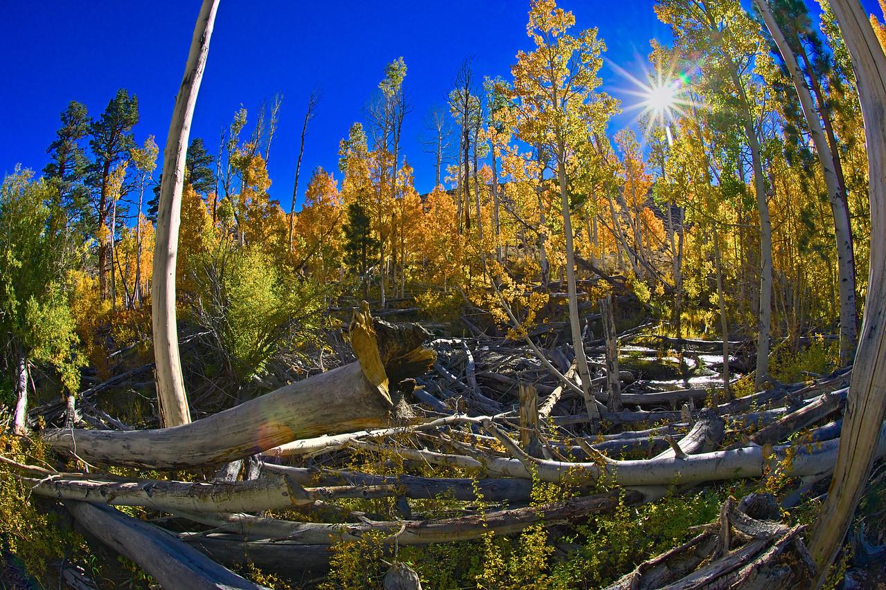 Sunshine Trees and Logs