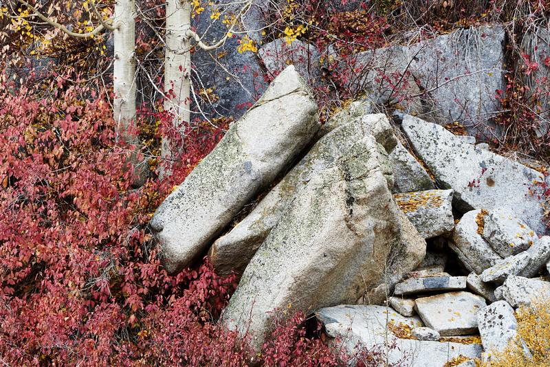 Trees on Rugged Hillside