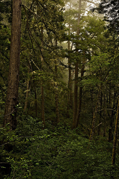 Forest Jenner gulch I
